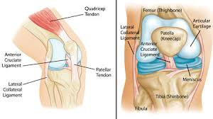 Interactive Knee Anatomy Parts Of The Knee Knee Joint Anatomy And Physiology Shoulder Elbow