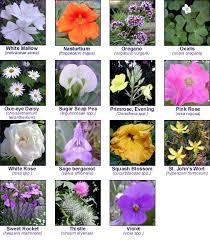 Edible Flowers Edible Flowers