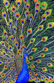 58 best peacocks images on pinterest mosaic art stained glass