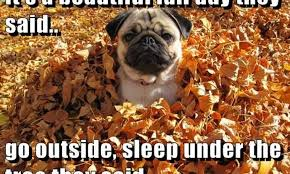 Fall Memes - 7 funny fall memes to share on facebook that celebrate the first