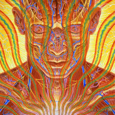 compare prices on 24x24 alex grey online shopping buy low price