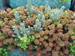 drought tolerant native plants drought tolerant plants an introduction u2013 awkward botany
