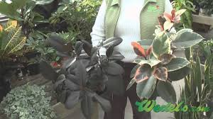 Low Light Indoor Plants by Caring For Low Light And High Light House Plants Youtube