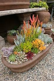 Rock Garden Mn Here S A Great Container Planting Idea For Your Rock Garden Pot