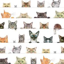 cat wrapping paper entertaining with caspari gift wrapping paper kitties 2 sheets