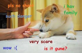 Doge Meme Original Picture - such danger doge know your meme