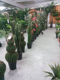 Indoor Tropical Plants For Sale - material artificial cactus flowering plants and succulent plants