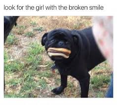 Depressed Pug Meme - dopl3r com memes look for the girl with the broken smile with a