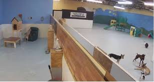 Dog Daycare Floor Plans by Home Lucky Dogs Daycare