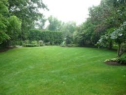 backyard with hedges and green grasses maintenance tips for
