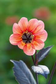 81 best cut flowers images on pinterest cut flowers flower