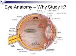 Eye Anatomy And Physiology Assessment Of Eyes And Ears Ppt Video Online Download