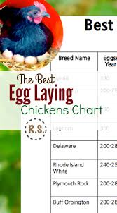 Best Backyard Chicken Breed by Best Egg Laying Chickens Chart Laying Chickens Egg And Bird