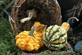 free images fall orange food harvest produce autumn