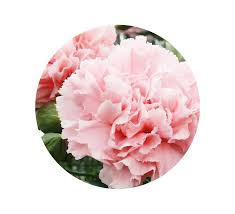flower of the month birth month flowers and their meanings flowers by matthew