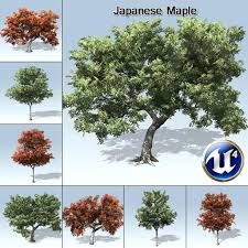 japenese maple tree japanese meaning seeds information sale