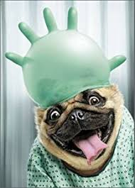 with surgical glove pug get well card