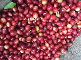 thanksgiving point farm hours blog da kine coffee bean
