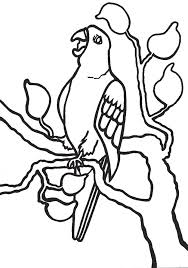 big parrots colouring pages page 3 coloring home