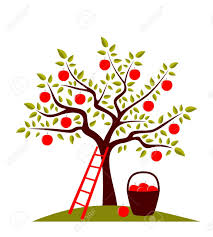 apple tree images stock pictures royalty free apple tree photos
