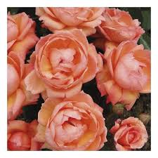 129 best flowers for the garden images on pinterest home depot