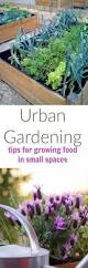 urban gardening ideas for small spaces turning the clock back