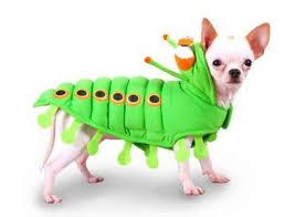 Cheap Dog Costumes Halloween Resultados La Búsqueda Imágenes Google Http Www