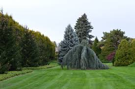 free images tree nature grass lawn flower scenic evergreen