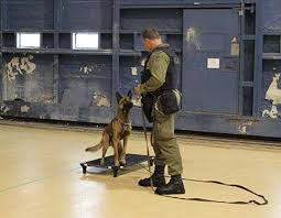 belgian shepherd ottawa airports and law enforcement u2013 partners in canine security