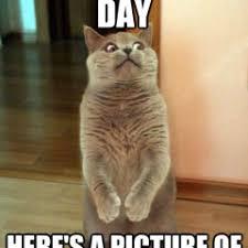 Happy Cat Meme - funny meme archives page 755 of 982 cat planet cat planet