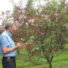 fruit trees from stark bro s fruit trees for sale