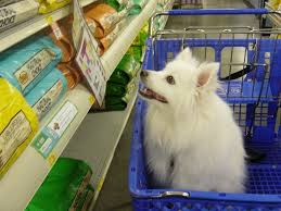 american eskimo dog what do they eat casper d dog hi my name is casper i am a mini american eskimo