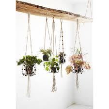 plante pour cuisine potager pour plantes aromatique dans la cuisine jardinage