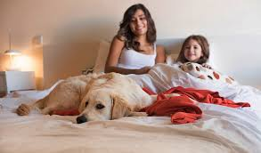 How To Get A Comfort Dog How To Help A Dog Get Onto A Bed Or In A Car And Manage Heights