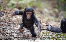 Running Baby Meme - monkey memes funny monkey pictures memey com