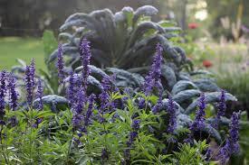 what didn u0027t go well in my garden this season organic media network