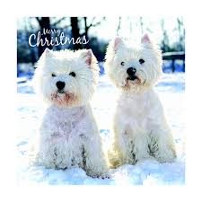westie christmas cards white west highland terrier christmas cards