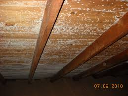 mold removal in a dennis attic mold pros