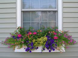 Image For Flowers Best 25 Window Box Flowers Ideas On Pinterest Flower Boxes