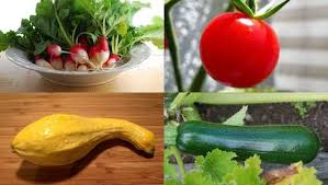 easy vegetables to grow mnn mother nature network