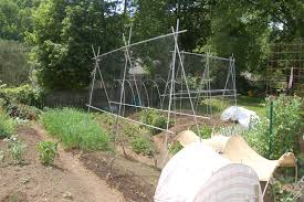 midwestern garden trellis i am using for pole beans watermelon