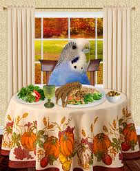happy thanksgiving for friends budgie thanksgiving