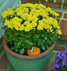 recycling ideas for fall container gardens hubpages