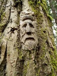 tree face 40 amazing tree wood carving pictures