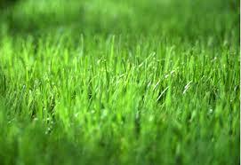 green grass kueker u0027s nursery