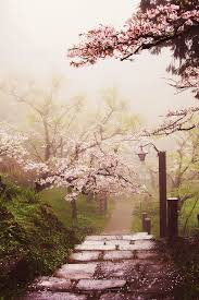 morning blossom wallpapers japanese cherry blossom garden beautiful places pinterest