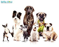 wallpapers for dogs 89