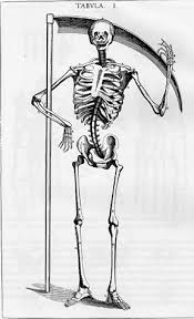 Anatomy Of The Human Body Bones The History Of The Skeleton