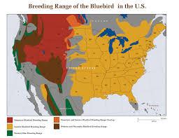 bluebird biology how to attract bluebirds barn owl box company