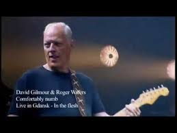 Comfortably Numb Roger Waters David Gilmour David Gilmour Roger Waters Comfortably Numb Youtube